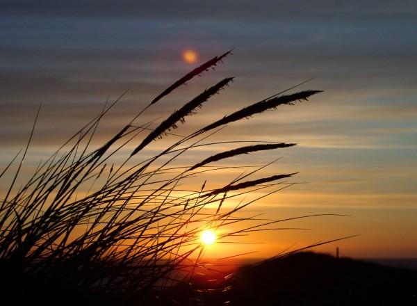 sun-grass-dune-denmark-86697